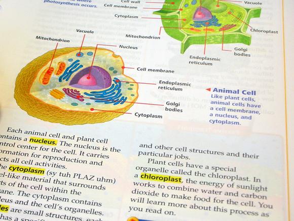 Página de libro de texto de ciencia