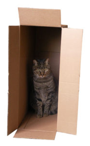 Gato dentro de caja de cartón